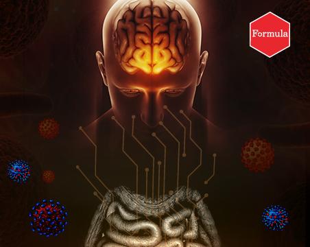 מעיים - המוח השני